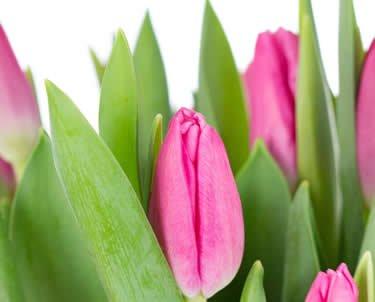 Tulpen bij Anjelier Bloembinders